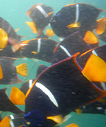 photo of fish underwater at boca de tomatlan, Mexico