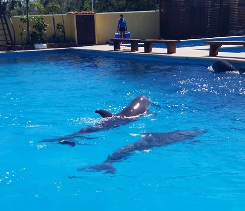 Spirit Retreat Puerto Vallarta 2016 Dolphin Adventure