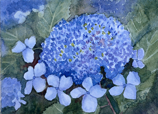 watercolor of hydrangea
